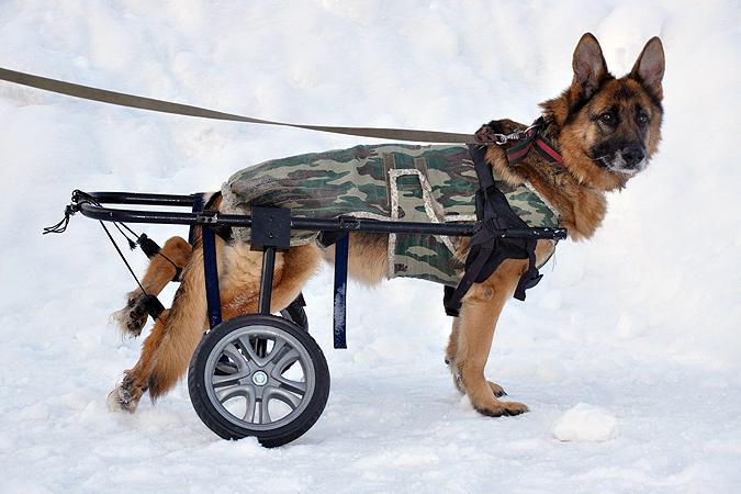 Инвалидные коляски для собак как сделать своими
